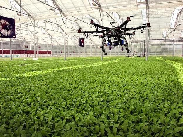 Ventajas del Big Data y la visión artificial en los procesos agroalimentarios